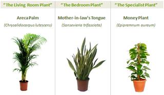 Greenspaces_three_plants1